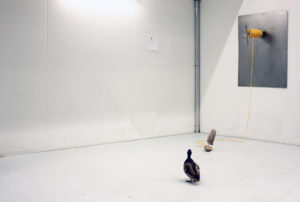"""Anselm Schenkluhn. """"Lago mangiare"""". Installation, 2014. angelockte Ente, Boot aus Brot, Edelstahl, Rettungswinde, Zeichnung. Ansicht Kunsthaus am Weißensee, Berlin, Foto: Anselm Schenkluhn"""