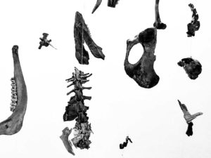"Ulrich Gunreben, ""MORBILE"", 2019, Knochen, Silikat, ca. 200 x 150 x 150 cm (h,b,t,), Foto: privat"