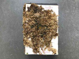 """Nathalie Giraud, """"Mémoires des senteurs"""", 2012, Bücher mit Moos Überwachsen, 9 x 15 x 22 cm, Foto: Nathalie Giraud"""